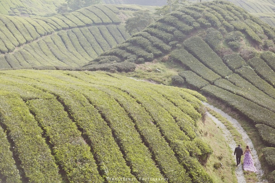 Pre-Wedding Freelance Destination Boh Tea Farm Copthorne Hotel Cameron Highlands _KL Photographer_009